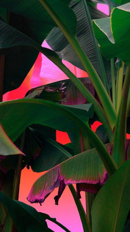 Palms on Acid